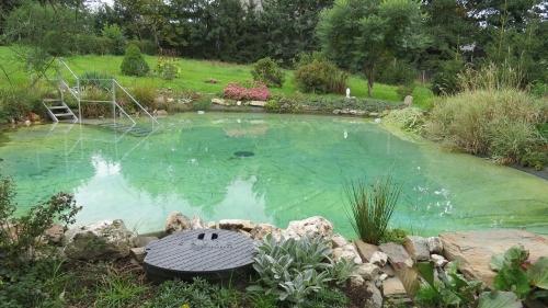 Gartenteich badeteich selbst gebaut for Gartenteich umrandung